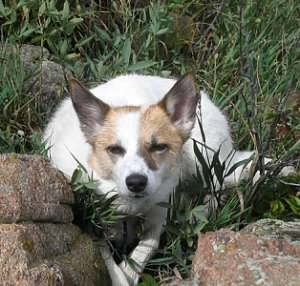 Aby, dog laying down between rocks